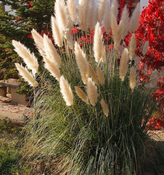 El Ayuntamiento de Huesca se suma a la lucha contra las especies exóticas invasoras