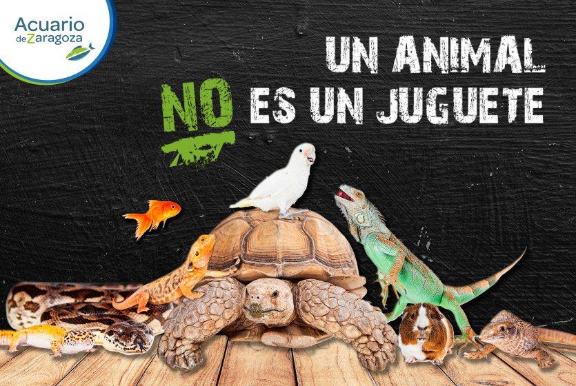 Campaña «Un animal no es un juguete»
