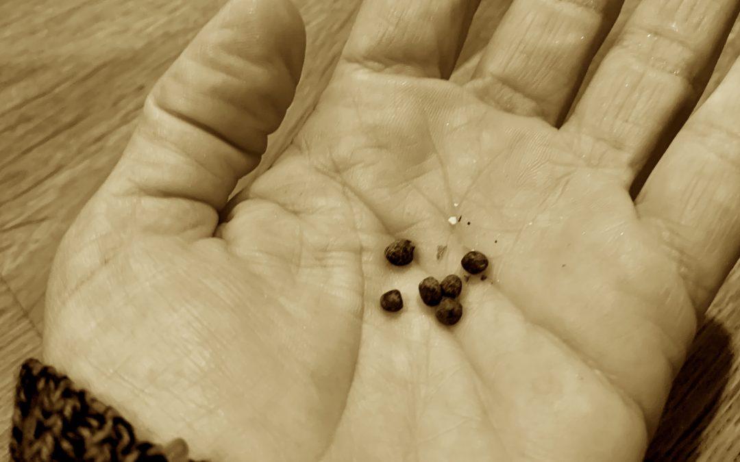 El Gobierno solicita a la ciudadanía informar la recepción de sobres con semillas no solicitadas