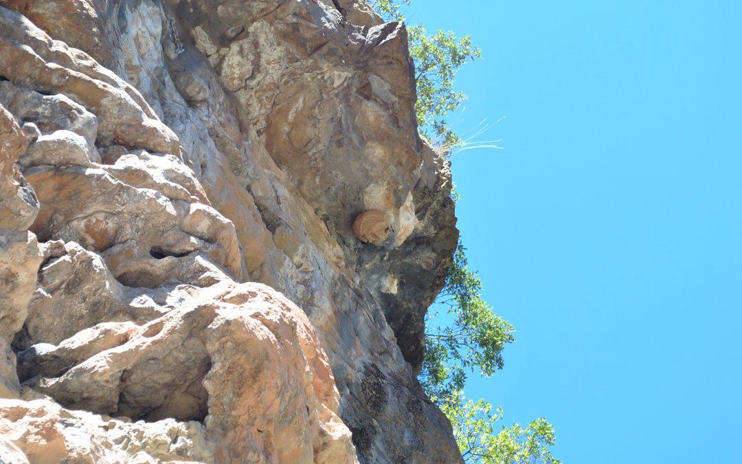 Avispa asiática: retirado un nido en Salvatierra de Esca. Claves para diferenciar sus nidos