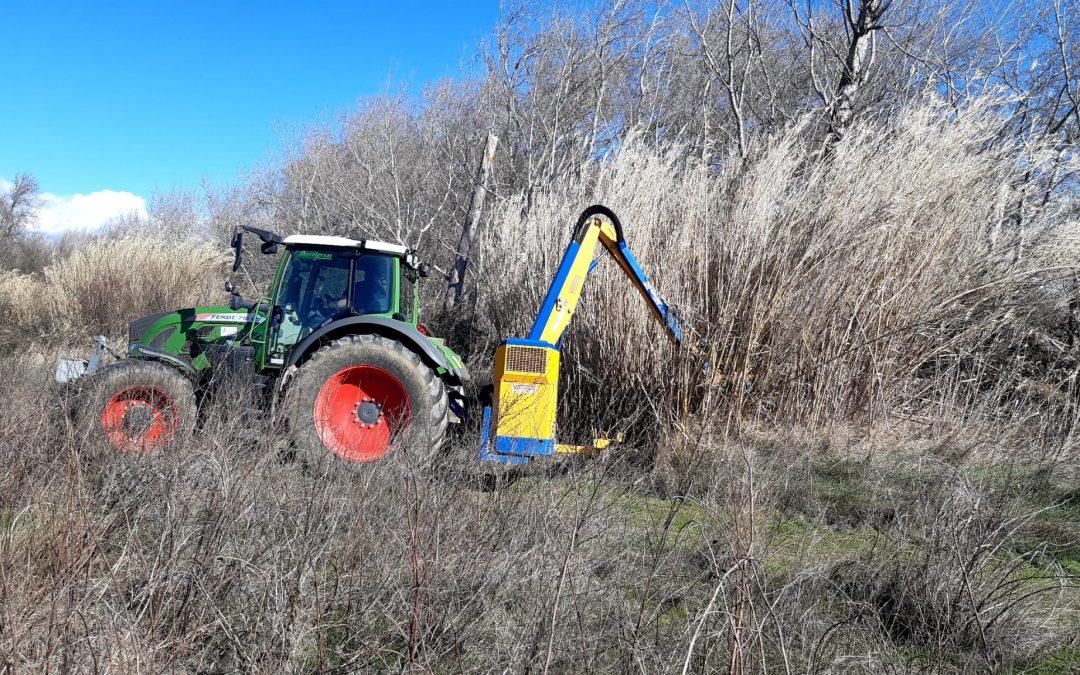 Ebro Resilience inicia la eliminación de especies de flora invasora en el tramo medio del Ebro